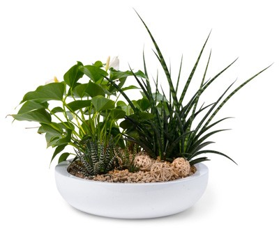 köpa växter uppsala