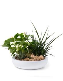 växter till företag